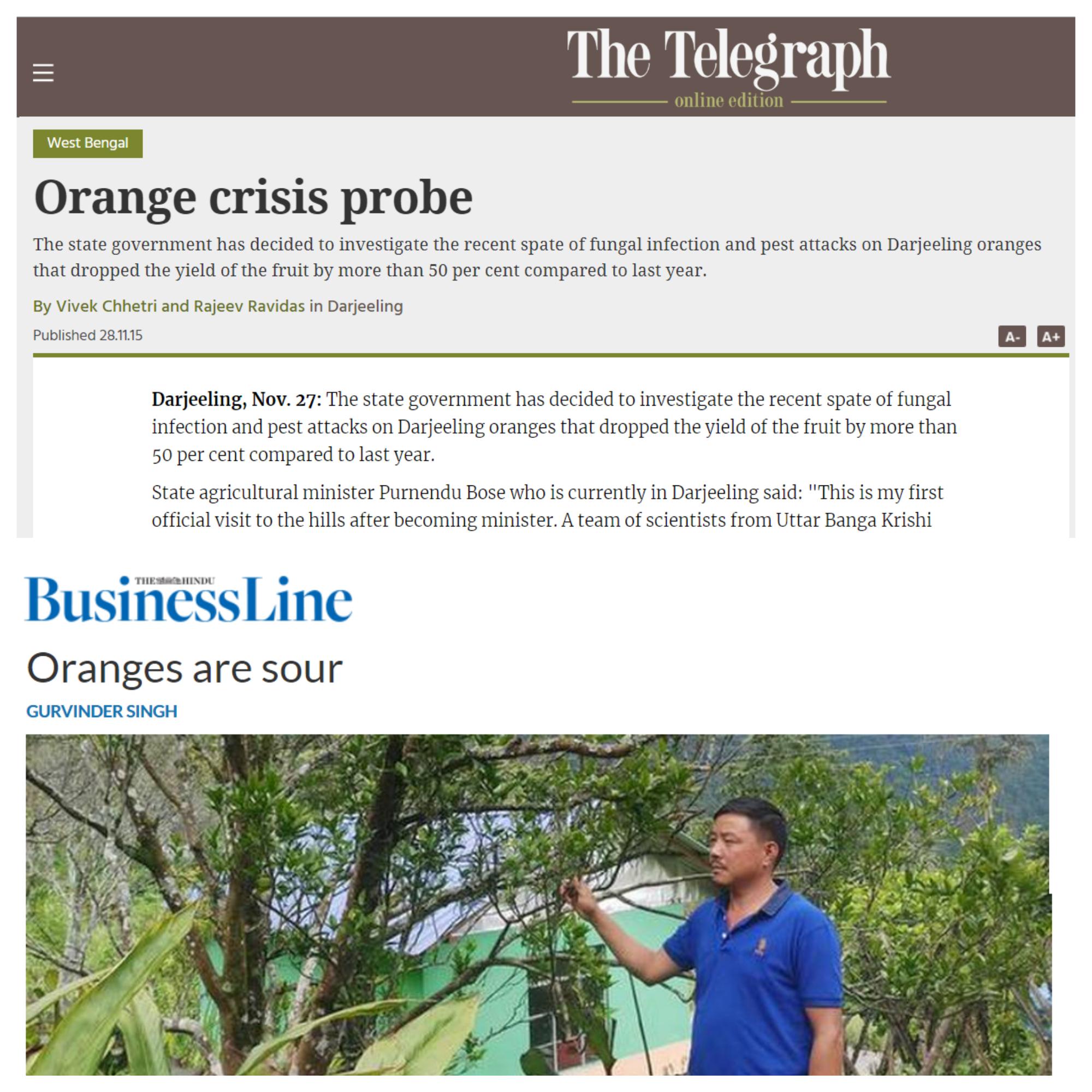 Mandarin Oranges Crisis